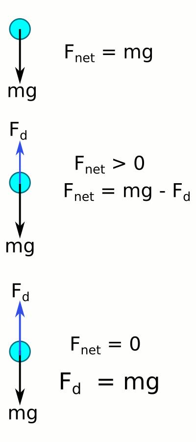 Limit hız serbest cisim diyagramları
